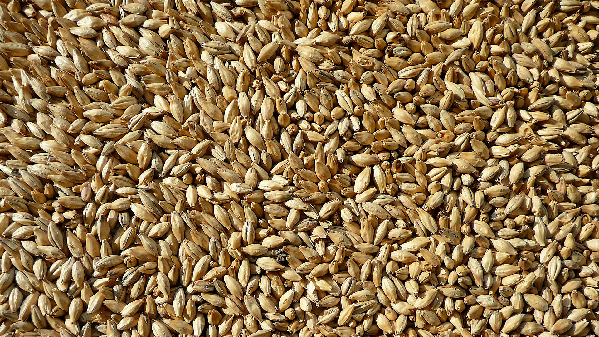 Malt – from barley and wheat